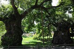 광주호 생태공원(400년 왕버드나무)