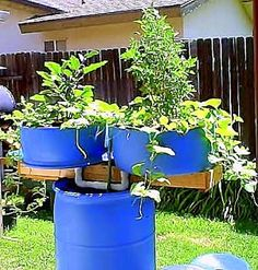 Have you heard of aquaponics? Aquaponics Combines the Growing of Fish and Plants You may grow plants in water and without soil and once one does this together with growing fish you are practicing aquaponics. Aquaponics Supplies, Aquaponics Plants, Aquaponics System, Hydroponic Gardening, Hydroponics, Backyard Aquaponics, Indoor Gardening, Gardening Tips, Growing Plants
