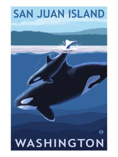 San Juan Island, Washington - Orca and Calf - Lantern Press Artwork Giclee Art Print, Gallery Framed, White Wood), Multi Whidbey Island Washington, Seattle Washington, Washington State, Olympia Washington, Vashon Island, Orcas Island, Evergreen State, San Juan Islands, Vintage Travel Posters