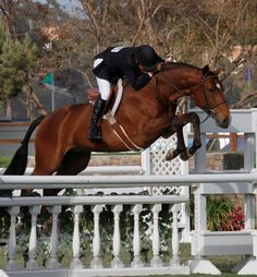 John French and Small Affair are Champions in the USHJA International Hunter Derby at the Showpark Ranch and Coast horse show