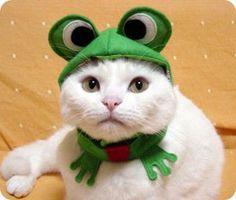 Fotos de disfraces para gatos
