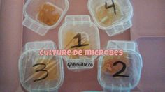 Les Microbes, Culture, Ice Cube Trays, Homemade, Children
