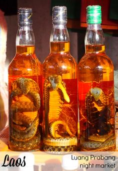 Why visit Luang Prabang, Laos? Find 9 reasons right here!. Snake wine, Luang Prabang Night Market, Laos