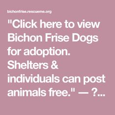 """""""Click here to view Bichon Frise Dogs for adoption. Shelters & individuals can post animals free."""" ― ♥ RESCUE ME! ♥ ۬ Border Collie Rescue, Collie Dog, Bichon Frise Rescue, Post Animal, Guide Dog, Dogs, Free, Animales"""