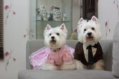 Westie in love hOW SWEET ARE THEY!