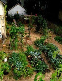 cottage vege garden.