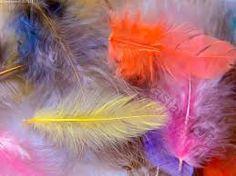 Kuvahaun tulos haulle värikkäitä sulkia