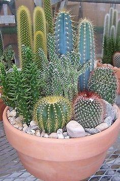 HOT Cactus Mix variety RARE globular columnar garden cacti succulents