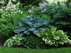 Hostas & Wild Ginger....