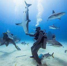 ¿Es posible hipnotizar a un tiburón? Solo si le tocas el hocico Existen varios buzos en el mundo que son capaces de paralizar a los tiburones y llevarlos a un estado parecido a la hipnosis.  Parece ser que el primero de ellos en descubrir este curioso fenómeno fue Andre Hartman que ante un ataque un tiburón descubrió con sorpresa que al tocarlo en una zona cercana a sus mandíbulas el tiburón quedaba inmóvil.