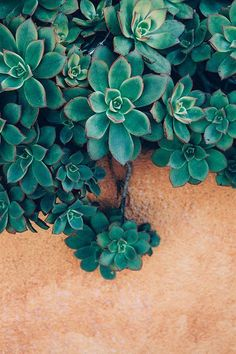 Peach and Teal Blue Green / Succulent Photography Bohemian Print Cactus by wanderlustography Garden Wallpaper, Wallpaper Für Desktop, Wallpaper Backgrounds, Iphone Wallpapers, Backgrounds For Iphone, Vintage Phone Wallpaper, Peach Wallpaper, Nature Iphone Wallpaper, Vintage Wallpapers