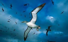Flock of seagulls in the sky wallpaper