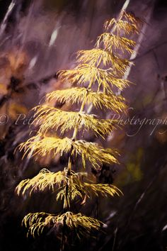 Field horsetail... painterly photography Photography For Sale, Fine Art Photography, Autumn, Prints, Art Photography, Fall