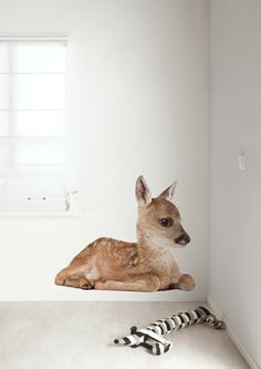 Muursticker Forest Friends Deer XL hert. Deze leuke muursticker met dit schattige hertje staat niet alleen leuk in de babykamer, maar ook in de kinderkamer. Voor de stoere kinderkamer kunt u kiezen uit een lieve beer of slimme vos.  Haal het bos in huis met dit lieve hertje als muursticker!