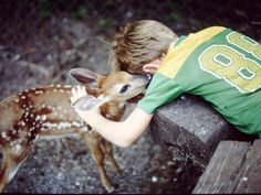 un bambi - que bello.