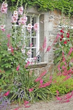 Hollyhocks ~ cottage garden by jana