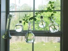hanging window plants