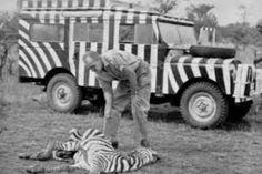 1958 * Land Rover Series I Grille III SW Bernhard Grzimek, german animal conservationist in Serengeti National Park, Tanzania. Land Rover Serie 1, Land Rover Defender 110, Landrover Defender, T3 Vw, Best 4x4, Game Lodge, 4x4 Trucks, Station Wagon, Vw Bus