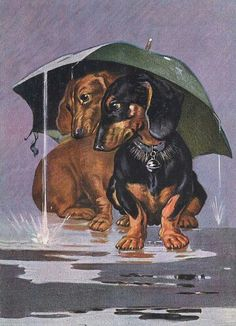 Dachshund Charming Dog Greetings Note Card Two Dogs Sit Under Umbrella In Rain Basset Dachshund, Vintage Dachshund, Dachshund Art, Daschund, Two Dogs, I Love Dogs, Cute Dogs, Weenie Dogs, Doggies