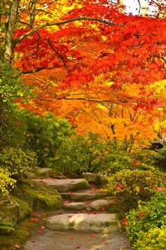 Stone steps in a forest in autumn, Washington State, USA by Panoramic Images