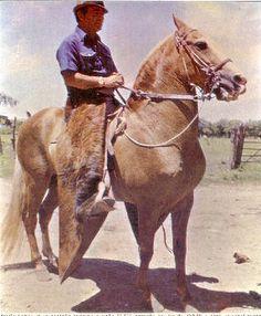 Colombian Criollo horse. Don Danilo, monta Adolfo Gómez