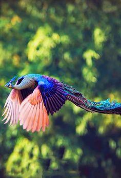 How they look in flight...