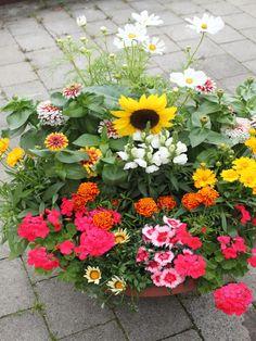 kuebelpflanzen schatten schatten pflanzen home garden. Black Bedroom Furniture Sets. Home Design Ideas