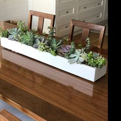 See more from this shop on Etsy, a global marketplace of creative businesses. Indoor Planter Box, Succulent Planter Diy, Herb Planters, Planter Table, Concrete Planters, Succulents Diy, Succulent Centerpieces, Succulent Care, Succulent Arrangements