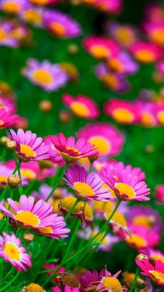 flowers, nature, summer, glade photo