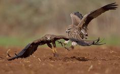 Animal Action, Bird, Animals, Animales, Animaux, Birds, Animal, Animais