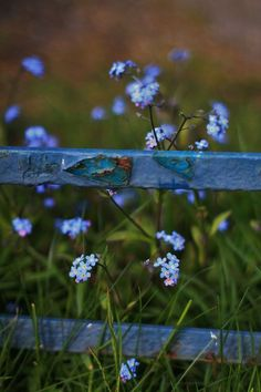 New Screen blue garden fence Style Whether you want fencing guidelines to establish border in garden, obscure the eye sore, region certain areas . Little Flowers, Blue Flowers, Wild Flowers, Garden Wallpaper, Country Fences, Rustic Fence, Meadow Garden, Old Fences, Country Blue