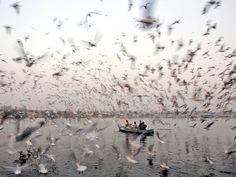 Men feed birds in the Yamuna river in New Delhi on November 23, 2012.