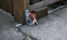 squee! hi hi doggy