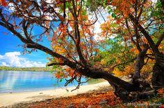 Pink Beach, Komodo Island by Johnny Siahaan, via Flickr