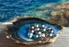 Znalezione obrazy dla zapytania perły w muszli