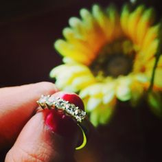 Beautiful 5 diamond ring by Jewelove! Design : JL PT 416 #jewelove #platinum
