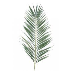 feuille-palmier-majesty-palme-95-et-149-cm.jpg (900×900)