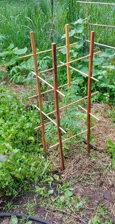 Tomato Cage Diy, Tomato Cages, Tomato Garden, Tomato Plants, Tomato Tomato, Grape Trellis, Tomato Trellis, Bamboo Trellis, Diy Trellis
