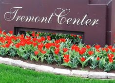 #Tulips outside of the Tremont Center in #Columbus #Ohio