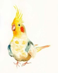cockatiels are #painting #painting art