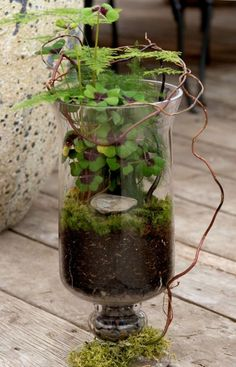 In that case what makes a terrarium sympathetic and attractive for indoor decoration? bulb, teapot, jar, a bottle could turn into a terrarium. Ikebana, Air Plants, Garden Plants, Indoor Plants, Terrarium Jar, Succulent Terrarium, Pot Jardin, Decoration Plante, Little Gardens