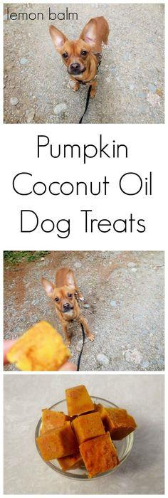 Pumpkin (cinnamon) Coconut Oil Dog Treats - no bake!