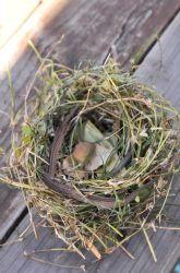 Kindergarten Construction & Sculpture Activities: Make Like a Bird and Nest