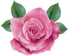 Pink Rose Transparent PNG Clip Art