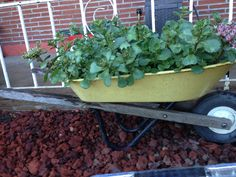 One of the vintage Radio Flyer Wheel Barrel planter/container garden creations I've made :)   Make sure to drill holes for drainage & coat the inside of it with polyurethane to keep your plants healthy.