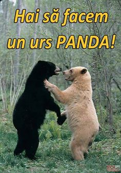 Funny pictures about How to make a panda. Oh, and cool pics about How to make a panda. Also, How to make a panda. Funny Shit, Funny Cute, Funny Memes, Funny Pics, Funny Stuff, Pet Memes, Funny Things, Funny Animal Pictures, Funny Animals