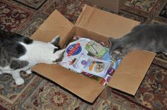 I Gots Klout & Dat Gets Me Perks Like Dis Hills Science Diet Box o Goodies  #winwithhills @Klout @Hill's Pet Nutrition