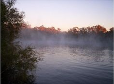 Dalhousie Hot Springs, Witjira National Park in South Australia / Wonderful early in the morning, with the sun rising, a mist over the warm water and the sound of the multitude of birds awakening. / Magical.