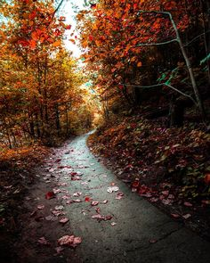 Happy first day of autumn!  While I'm sad to see summer end I'm excited for autumn's colours like this to explode. Walks in the woods will be so vivid.  Ravine Trail to Sassafras Point in Hamilton Ontario. . . . . . : Canon 5D3 16mm f4 1/250s #moodyimage #autumnishere #naturegeography #naturewalks #tree_magic #hikingtrail #tree_brilliance #autumnseason #treescape #getoutdoors #moodygram #myhamilton #hamont #sohamont #canoncanada #canon_photo #mycanonstory #ig_color #canadasworld #nakedplanet…