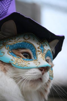 Mardi Gras Kitteh is all mysterious